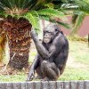 動物の気持ちになって天王寺動物園を楽しんだ話