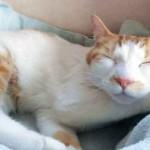 会陰尿道瘻造設手術を乗り越えた愛猫モモちゃんとのおだやかな暮らし